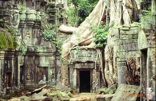 01 Cambodia Angkor Wat Ta Prohm tree jpg